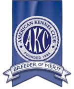 AKC Breeder of Merit, About Time Cane Corso