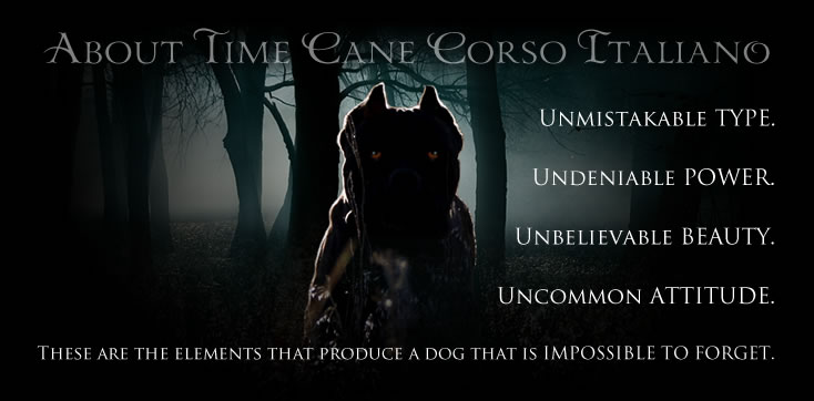 About Time Cane Corso. Unmistakable type. Undeniable power. Unbelievable beauty. Uncommon attitude. These are the elements that produce a dog that is Impossible to Forget.