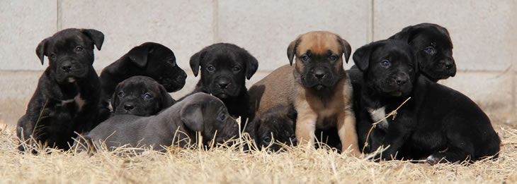 About Time Cane Corso Italiano Sales Policies