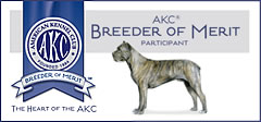 AKC Breder of Merit, About Time Cane Corso