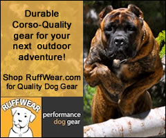 RuffWear Performance Dog Gear, Outdoor Gear, Jackets, Coats, All Season Paw Protection Dog Boots, Dog Packs, Lifejackets, Leashes, Joring Harnesses, and more!