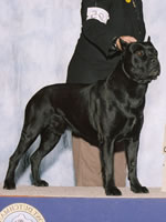 """Bach"" 